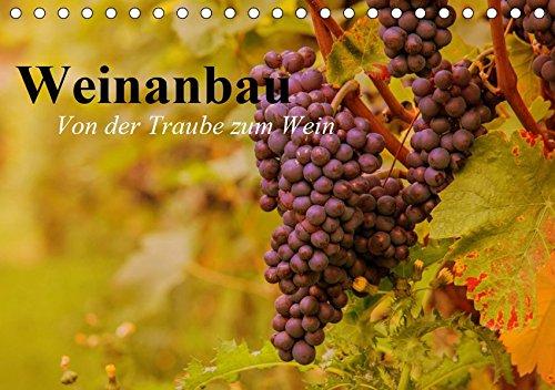 Weinanbau. Von der Traube zum Wein (Tischkalender 2019 DIN A5 quer): Schöne Impressionen vom interessanten Weinbau (Geburtstagskalender, 14 Seiten ) (CALVENDO Natur)