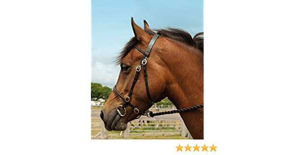 Black Finest Imported Leather 3 Point Horse Breastplate Size Full AND Tigerbox/® Antibacterial Pen!