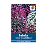 Lobelia Colour Cascade Mixed Seeds