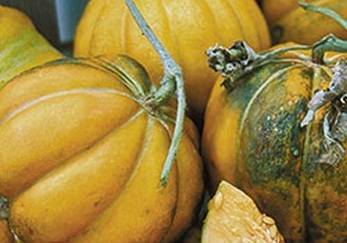 Noir des Carmes Melone aus Frankreich, Einsteigermelone, 10 frische Samen