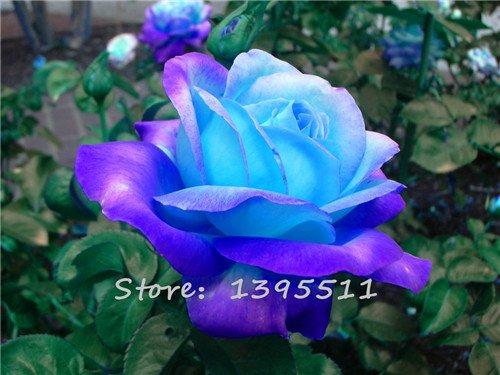 100pcs Plant Magnifique