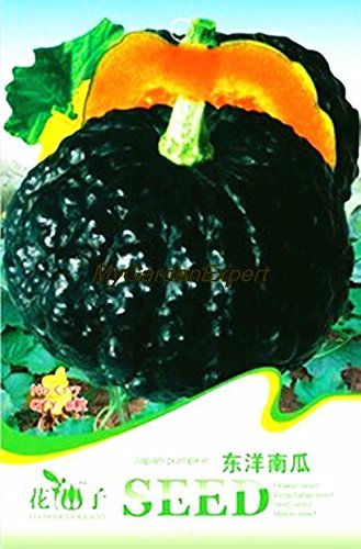 Hot vente 8pcs Graines Japon citrouille, graines de citrouille japonais, graines de légumes, Pot bricolage Plante jardin Livraison gratuite