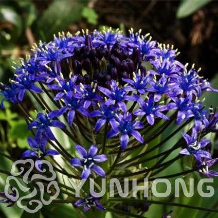 AGROBITS 100PCS Blue Bell Blumen Bonsai Schöne Blume Bonsai Mix Indica Lily Pflanzen Garten Birnen Blumen im Freien Topf Bonsai Flores: MIX