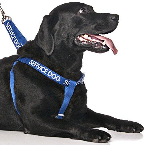 Service-Hund Blau Farbcode Nylon Große L-XL Nicht Ziehen Hundegeschirr (Do Not Disturb) verhindert Unfälle durch Warnung Sonstige Ihren Hund im Voraus! (Service-hund Mantel)