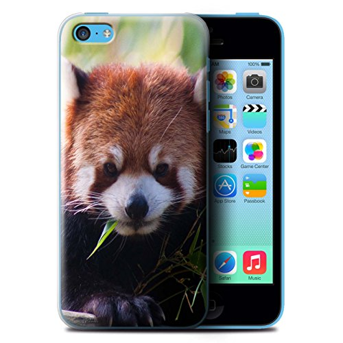 Coque de Stuff4 / Coque pour Apple iPhone 5C / Panda Design / Animaux Sauvages Collection Raton laveur