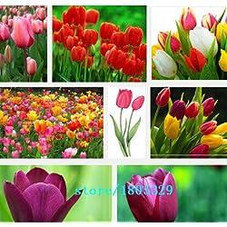 Bulbos del tulipán, semillas Bola del tulipán vendedores calientes 100pcs Bonsai Tiesto Mix Bola Planta Colores del jardín de DIY