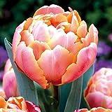 AIMADO sementi giardino - 100pcs Raro Tulipani a grandi fiori multipli in miscuglio Bouquet Semi sementi fiori giardino resistenza al freddo Pianta perenne, ideale per Cespuglio/Balconi e terrazze