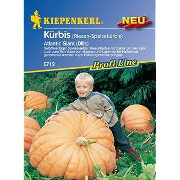 "KÜRBIS bis 300 Kg!!Packung 2 Gramm /""ATLANTIC GIGANT/"""