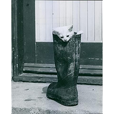 Vintage photo of A cat intrude inside the labor shoes, and looking (Feral Cat House)