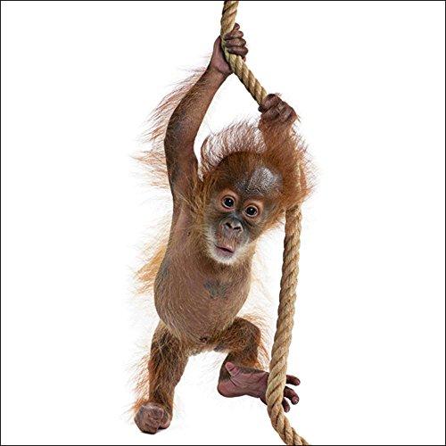 Artland Qualitätsbilder I Glasbilder Deko Glas Bilder 30 x 30 cm Tiere Wildtiere Affe Foto Weiß A5TR Baby Sumatra Orang Utan hängt an einem Seil