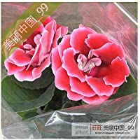 IDEA HIGH Planta de gloxinia flor de semillas-colorido gloxinia 100 pcs: 18