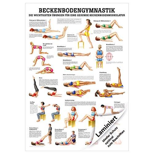 Beckenbodengymnastik Mini-Poster Anatomie 34×24 cm medizinische Lehrmittel