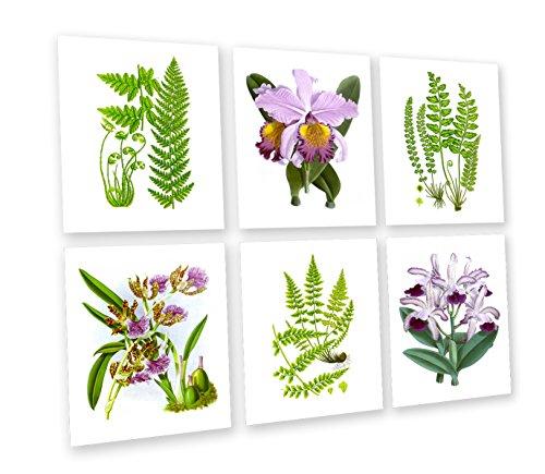 Gnosis Bild Archiv Tropical Art Wand Orchidee und Farne Botanischen Prints Set von 6Art Prints Lila Grün Floral Esszimmer Wanddekoration gerahmt Botanical 6b01