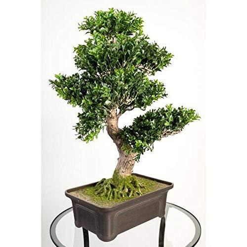 Artplants.de bosso bonsai artificiale in ciotola, 550 foglie, 65cm - pianta finta/bonsai in vaso