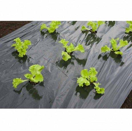 Nature Film de paillage Salade 6030266 - Longueur : 10 mnoir