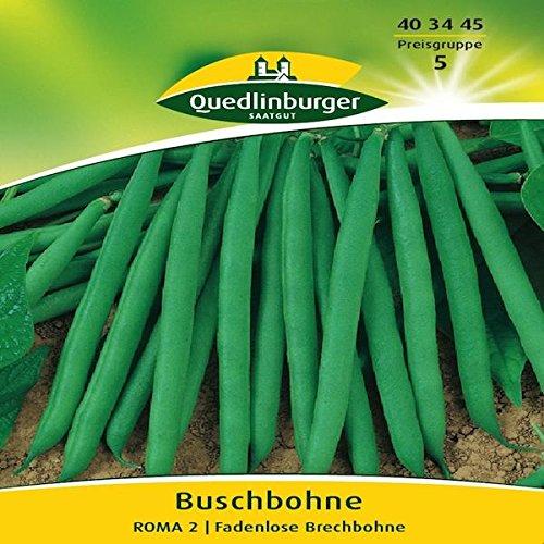 Preisvergleich Produktbild Buschbohnen Roma II / Flachhülsige Brechbohne (Phaseolus vulgaris) Standardsaatgut EG-Norm