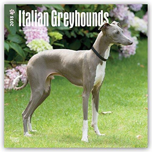 Descargar Libro Italian Greyhounds - Italienisches Windspiel 2018 - 18-Monatskalender: Original BrownTrout-Kalender -  mit freier DogDays-App de Browntrout Publishers