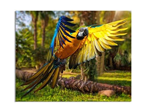 deinebilder24-wandbild-xxl-papagei-im-anflug-auf-leinwand-und-keilrahmen-beste-qualitat-handgefertig
