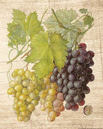 Rahmen-Kunst Keilrahmen-Bild - Nobleworks: Grapevine 2 Leinwandbild Wein-Trauben Reben Küche (80x100)