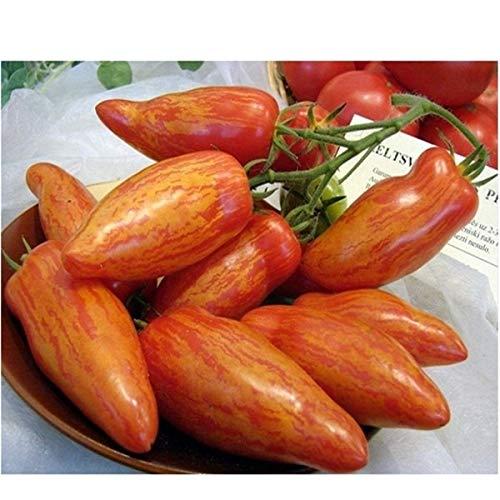 Pinkdose Fruits en pot Légumes cerises tomates bonsaï noir bonsaï princesse noire perle F1 cerise petit 200pcs: 8