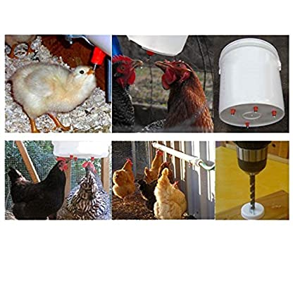 KEESIN Chicken Duck Poultry Feeder, Water Nipples, Screw-in Style Stainless Steel Ball, Automatic Drinker (50 PCS) 6