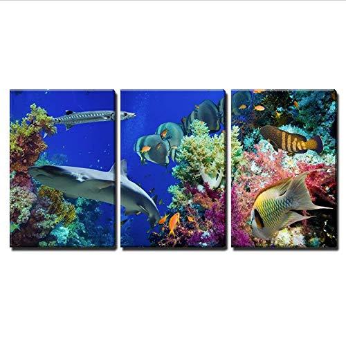 Fototapete Leinwand Wandkunst Tropical Anthias Fisch Mit Net Korallen Von Feuer Und Hai Im Roten Meer Riff Unterwasser 3 Teile/Set -