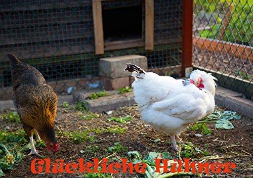 Glückliche Hühner (Tischaufsteller DIN A5 quer): Glückliche Hühner im Hühnerstall (Tischaufsteller, 14 Seiten) (CALVENDO Tiere) [Jul 24, 2013] Wernicke-Marfo, Gabriela -
