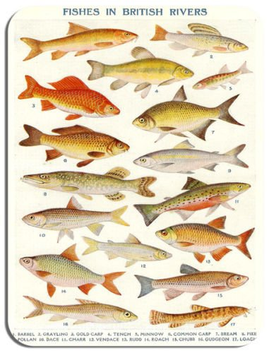 vintage-british-river-fish-poster-mouse-mat-fresh-water-fishing-mouse-pad