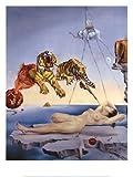 Lámina 'Sueño causado por el vuelo de una abeja alrededor de una granada un segundo antes de despertar, ca. 1944', de Salvador Dalí, Tamaño: 61 x 81 cm