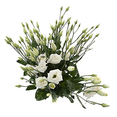 Choice of Green - 1 bouquet de lisianthe - 10 tiges - Hauteur ↕ 60 cm - Qualité de Hollande - Frais du cultivateur