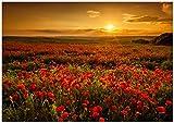 Wallario Wand-Bild 70 x 100 cm | Motiv: Mohnblumenwiese bei Sonnenuntergang am Abend | Direktdruck auf 5mm Starke Hartschaumplatte | leichtes Material | günstig