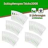Schlupfwespen gegen Textilmotten - Bis 10 Fächer und Schubladen oder 40 m² Teppichfläche - 6 Lieferungen x 8 Kärtchen
