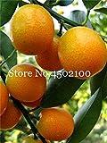 AGROBITS Promoción! 50 Pcs Balcón Patio árboles de frutas kumquat Bonsai Garden naranja mandarina Flores enano Cítricos Juicy Orange Tree Fruit: 6