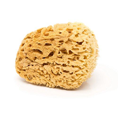 Bodycare Sea Sponge - Honeycomb