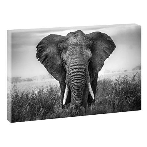 Elefante | v1720319| imágenes sobre lienzo | pared Imagen en formato XXL...