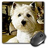 3dRose LLC 8 x 8 x 0.25 Inches Mouse Pad, Westie (mp_609_1)