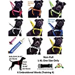 NERVOUS (Give Me Space) Yellow Colour Coded 60cm 1.2m 1.8m Neoprene Padded Handle Dog Leads PREVENTS Accidents By… 13
