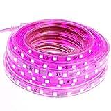 Smartfox LED Streifen 2m mit 120LEDs für Innen und Außen in violett