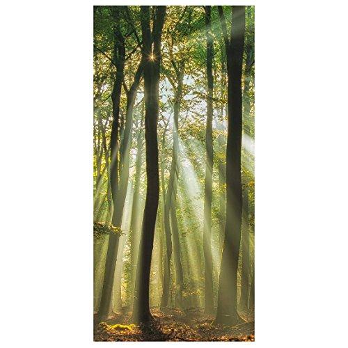 Bilderwelten Raumteiler Sonnentag Im Wald 250x120cm inkl. transparenter Halterung