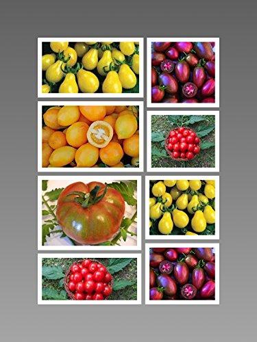 zuckerser-tomaten-samen-mix-top-ertrag-sehr-s-5-arten-by-samenchilishop