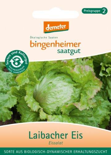 Bingenheimer Saatgut - Eisbergsalat Eissalat Laibacher Eis - Gemüse Saatgut / Samen