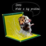 #4: Sio™ 5 Piece Non-toxic Adhesive Board Powerful Effect Mouse Rat Glue Board Sticky Mice Glue Trap Mouse Glue Snare Mice Rat Catcher Capturer