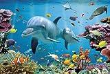 empireposter - Delfine - Tropische Wasserwelt - Größe (cm), ca. 91,5x61 - Poster, NEU -