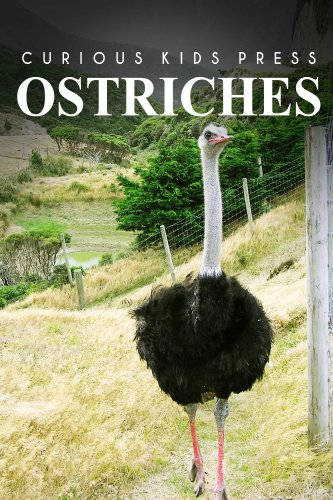 Ostrich - Curious Kids Press