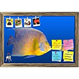 ArtzFolio Big Fish Chasing Small Fish Printed Bulletin Board Notice Pin Board cum Antique Golden Framed Painting 17.5 x 12inch