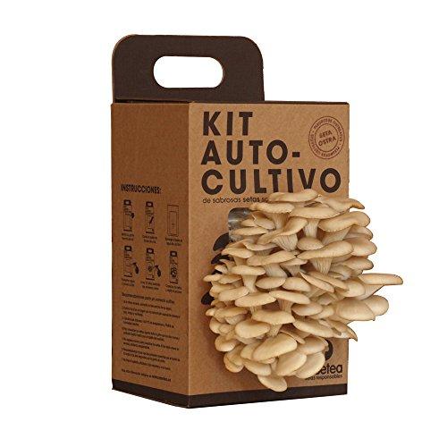 Kit Autocultivo de setas ostra sobre posos de café reciclados de Resetea