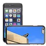 "Just Phone Cover Bild Hart Handy Schwarz Schutz Case Cover Schale Etui // M00139879 Spatzen Vogel Sperling Feed Tier // Apple iPhone 6 6S 6G 4.7"""