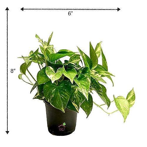 Best Indoor Plants Buy Best Indoor Plants Online at Best Prices in