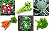 Best Lettuces - Go Green Exotic/English Vegetables Kit- Lettuce, Parsley, Celery Review