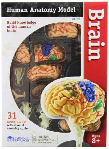 Preisvergleich Produktbild Learning Resources-Gehirn-Anatomie-Modell